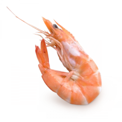 shrimps_PNG18258
